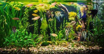 Jak zorganizować transport akwarium?