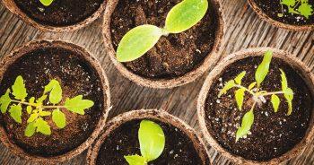 Jak zorganizować transport sadzonek drzew i krzewów?