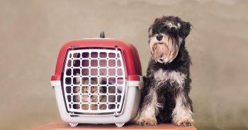 Jak zorganizować transport psa i kota za granicę?
