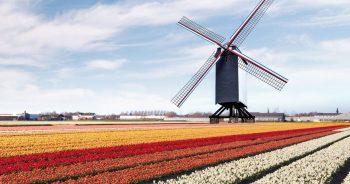 Jak zorganizować transport między Polską a Holandią?