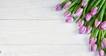 Ile kosztuje transport kwiatów?