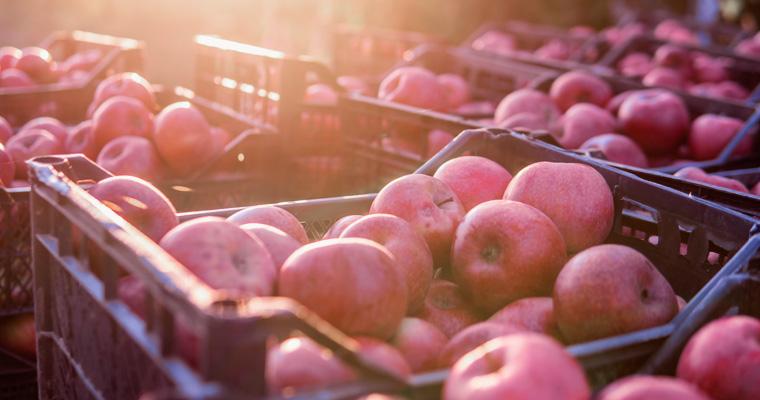 Co musisz wiedzieć o transporcie żywności?